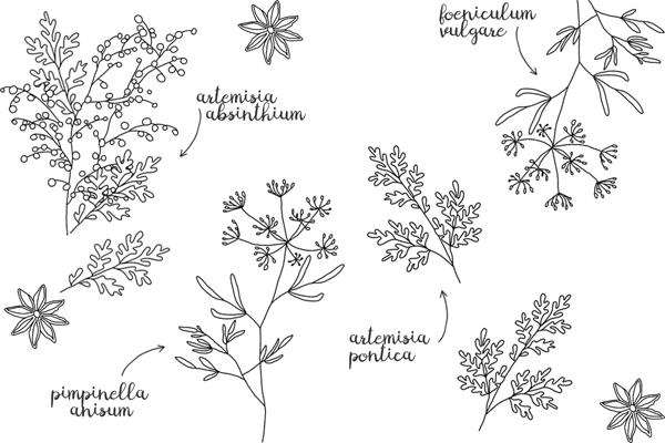 Wermutpflanzen